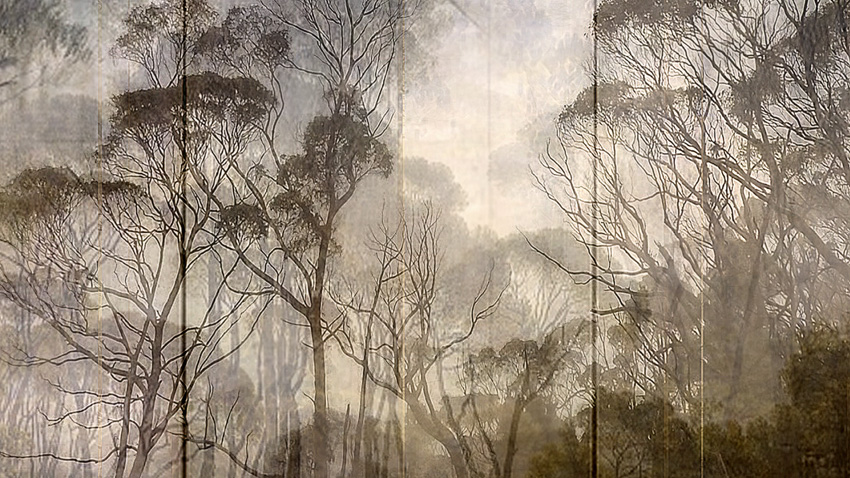 "Lisa Holden - Angelica (from Series ""Constructed Landscapes"")"