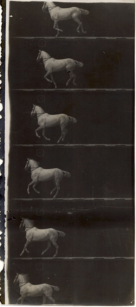 Etienne-Jules Marey - Print of Partial Film Strip of a White Horse in Six Frames