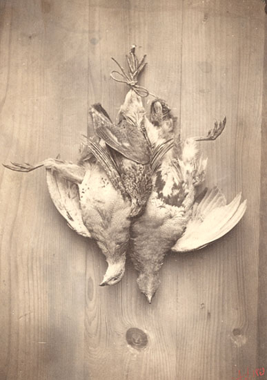 A. S. - Game Birds as Still Life