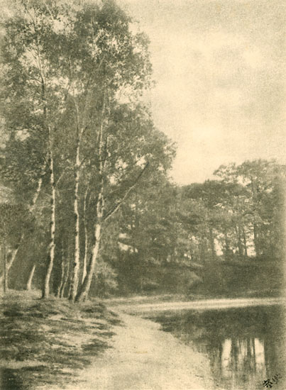 A. P. - Birch Trees by Lake